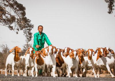 boer-goat-kle-3