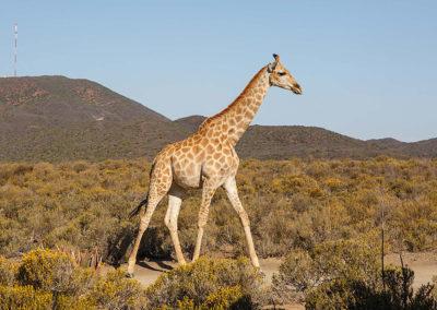 wildlife-exports-kle-1