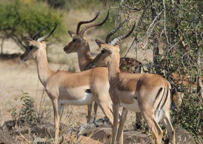 wildlife-exports-kle-2