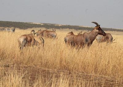 wildlife-exports-kle-3