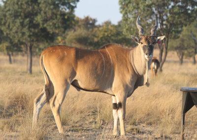 wildlife-exports-kle-5